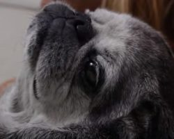 This Amazing DOCUMENTARY Between a Woman and her Pug Will Touch Your Heart