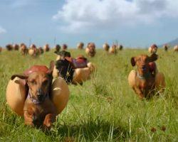 WATCH: Heinz 'Wiener Stampede' Super Bowl 2016 Hot Dog Commercial