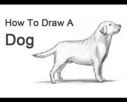 How to Draw a Dog (Labrador Retriever)!