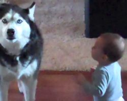 Mom Caught Her Baby Talking To The Dog. Their Conversation? Unbelievable.