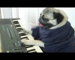 The Keyboard Dog