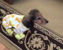 Dachshund Romping In Ducky Pajamas Is The Definition Of Ultimate Cuteness