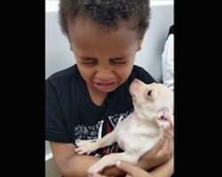 [Video] Little Boy Starts Crying When He Meets This Chihuahua For The First Time