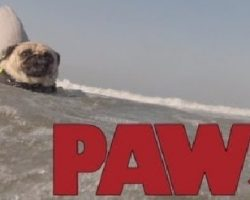 PAWS – The JAWS Parody You Never Knew You Needed, But Definitely Do…