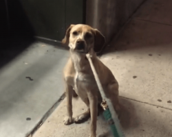 Dog Learns The Pet Store Is Closed For The Night, But She Refuses To Budge