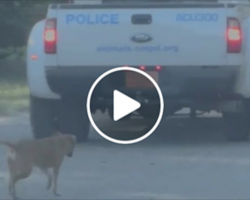 When This Police Stops For a Dog Following Them, She Hops Inside The Vehicle