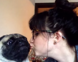 A Pug That Hates Kisses! THIS Will Make You Laugh, Guaranteed!