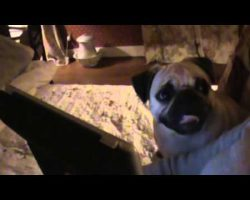 "Pug's Reaction to Movie ""Hollywood Homicide"" is Hilarious!!"