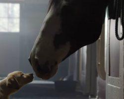 "Budweiser Unveils Super Bowl Commercial ""Puppy Love"""