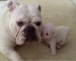 Ever seen a puppy throw a temper tantrum? The little pup in this video sure does…