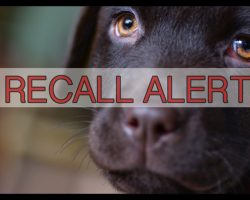 Two More Dog Food Companies Make The FDA Recall List