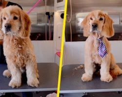 Senior Dog Left at Shelter When Owner Died Gets Makeover That Changes His Life