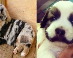 36 Dogs With The Most Beautiful And Unique Coat Markings In The World
