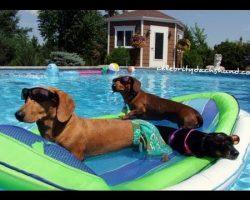 Sexy Ladies Wiener Party – it's a wiener dog pool party!