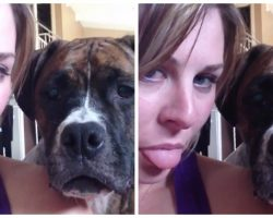 Woman Sticks Her Tongue Out. What Her Boxer Does Next Is HILARIOUS!