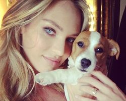 10 Celebrity Jack Russell Owners