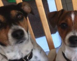 6 Problems Only Jack Russell Owners Will Understand