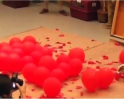This Dog Popping 100 Balloons In World-Record Fashion Will Blow Your Mind