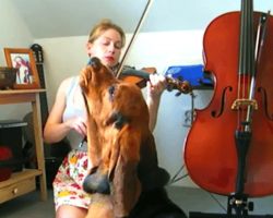 Basset Hound Adorably Sings Along During Violin Practice