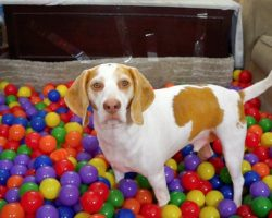 Beagle Gets Amazing Birthday Surprise