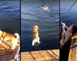 Beagle Jumps Into The Water To Rescue Girl From Drowning