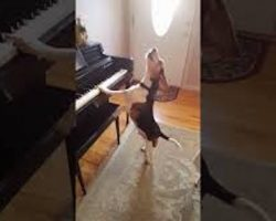 Adorable Rescue Beagle Plays Piano While Singing The Blues