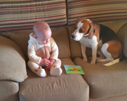 Dog Shocked All His Family Members When He Did This… Oh My!