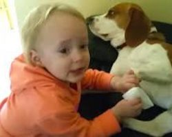 Beagle And Little Girl Share Special Unbreakable Bond