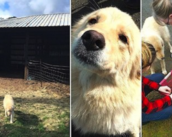 Daisy Is Depressed After She Loses Her Puppies In A Fire, So They Show Her A New Litter