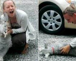 [Video] Dog Passes Out from Overwhelming Joy as She Reunites with Owner After 2 Years