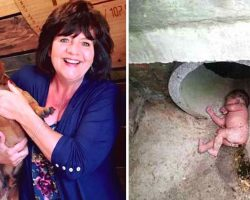Rescued Dog Barks Nonstop At A Storm Drain, Ends Up Saving An Abandoned Baby's Life