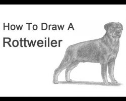 How to Draw a Rottweiler!