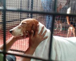 Beagles Rescued From Laboratory Cages Get Their First Taste Of Freedom