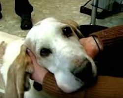 Man Thinks He Recognizes 13-Year-Old Basset Hound At Shelter, Reunites With Her After 10 Years Apart