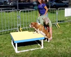 This Basset Hound Trying Her Absolute Best On An Agility Course Will Make You Smile!