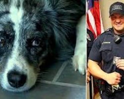 Police Officer Soothes Dog Who Bit Him While On A Call For Service