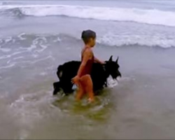 Protective Dog Looks Out For Girl And Keeps Her From Swimming At Dog Beach