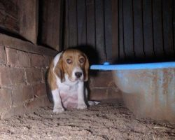 Frightened Puppy Mill Dog Hides Her Puppies In The Wall To Keep Them Safe