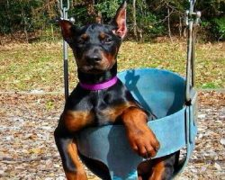 15 Signs You're A Crazy Doberman Person… and Damn Proud To Be!