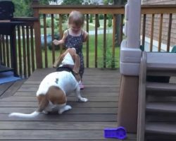Rescued Dog Dances With Toddler And Makes Mom Laugh Every Day