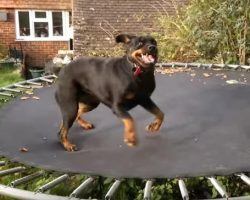 World's Happiest Dog REALLY Loves Her Trampoline and Can't Stop Bouncing