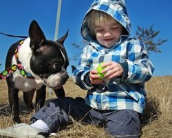 12 Reasons Why You Should Never Own Boston Terriers