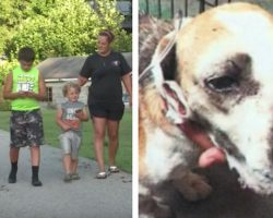 Family Rescues Severely Beaten Dog While Out Playing Pokemon Go