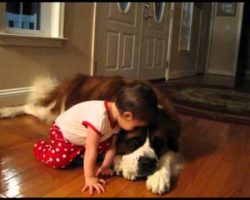 How This Gentle Giant Reacts To His Human Baby Sister Is The Best. You'll Love It.