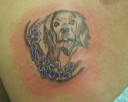 The 14 Coolest Cocker Spaniel Tattoo Designs In The World