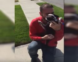 This Poor Dog Got Lost Far Away From Home. Now Watch their Tear-Jerking Reunion!