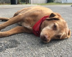 Devastated Owner Makes A Touching Promise To A Dying Pup, And He Keeps It