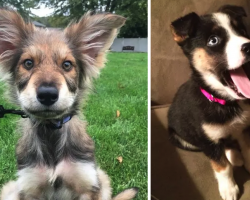 15 German Shepherd Mixes That Will Make You Do A Double Take