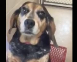 Woman Tells Shelter To Kill Her Dog Because She Was Sick Of Her, But They Post Her Photo Instead