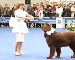 Woman Performs Intricate Dance Routine With Her Newfoundland Dog
